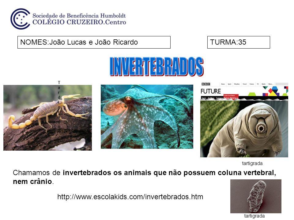 NOMES:João Lucas e João RicardoTURMA:35 Chamamos de invertebrados os animais que não possuem coluna vertebral, nem crânio.