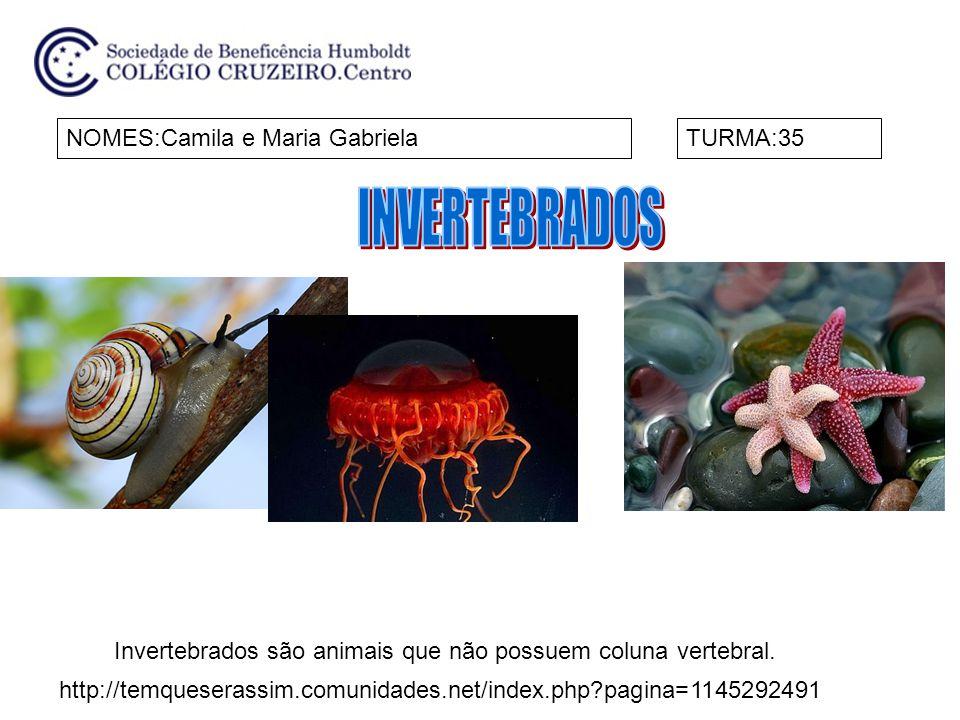 NOMES:Camila e Maria GabrielaTURMA:35 Invertebrados são animais que não possuem coluna vertebral.