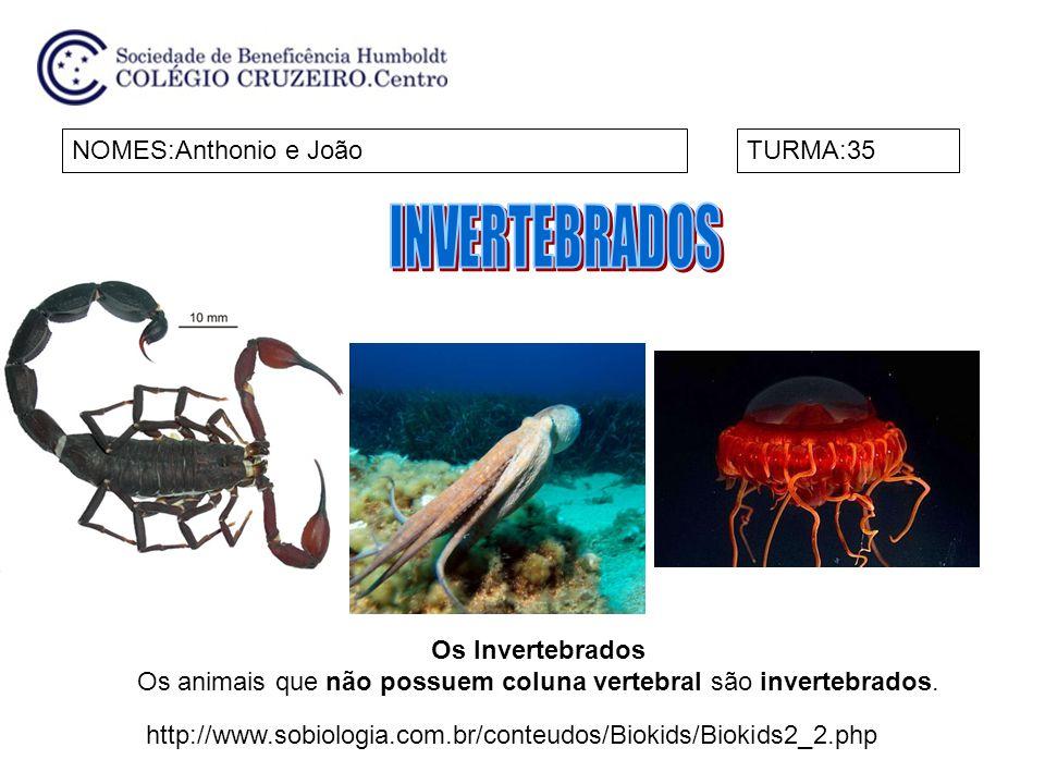 NOMES:Anthonio e JoãoTURMA:35 Os Invertebrados Os animais que não possuem coluna vertebral são invertebrados. http://www.sobiologia.com.br/conteudos/B