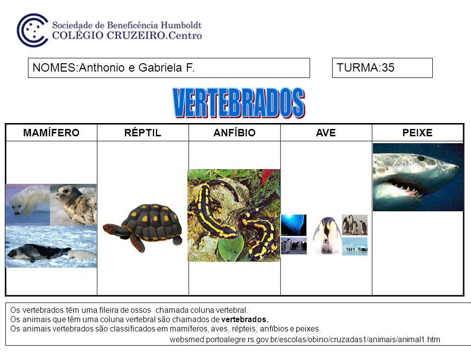 MAMÍFERORÉPTILANFÍBIOAVEPEIXE NOMES:Anthonio e Gabriela F.TURMA:35 Os vertebrados têm uma fileira de ossos chamada coluna vertebral. Os animais que tê