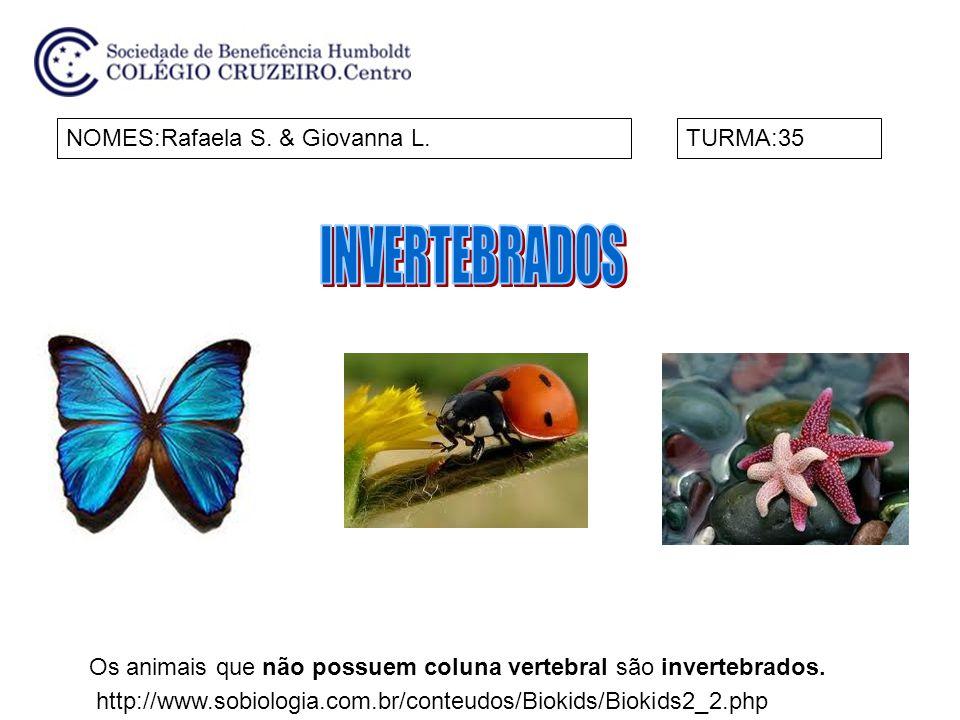 NOMES:Rafaela S. & Giovanna L.TURMA:35 http://www.sobiologia.com.br/conteudos/Biokids/Biokids2_2.php Os animais que não possuem coluna vertebral são i