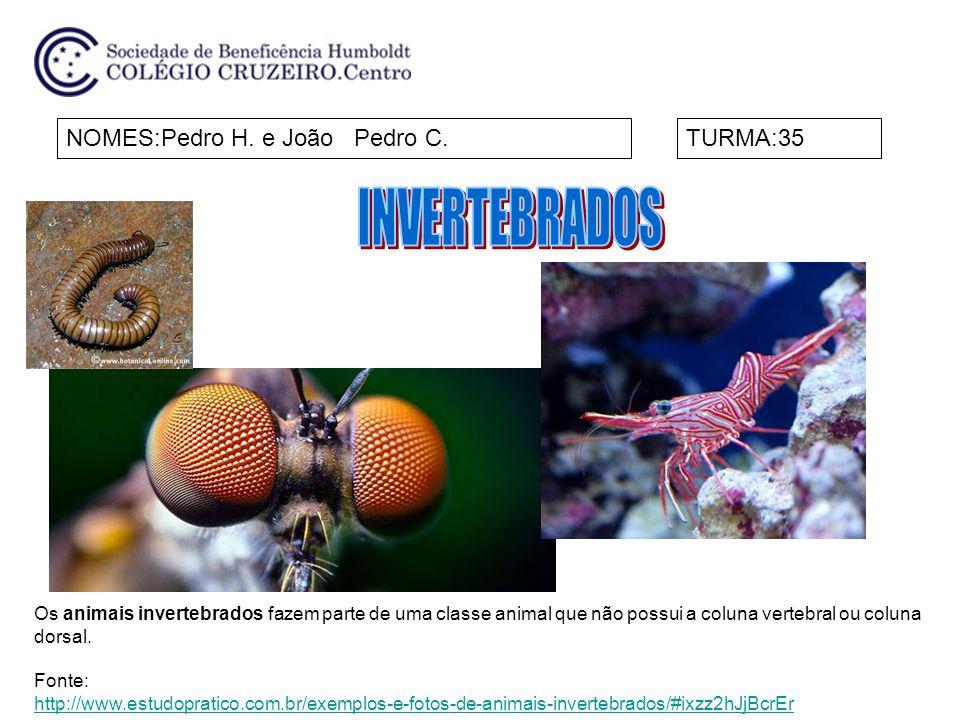 NOMES:Pedro H. e João Pedro C.TURMA:35 Os animais invertebrados fazem parte de uma classe animal que não possui a coluna vertebral ou coluna dorsal. F