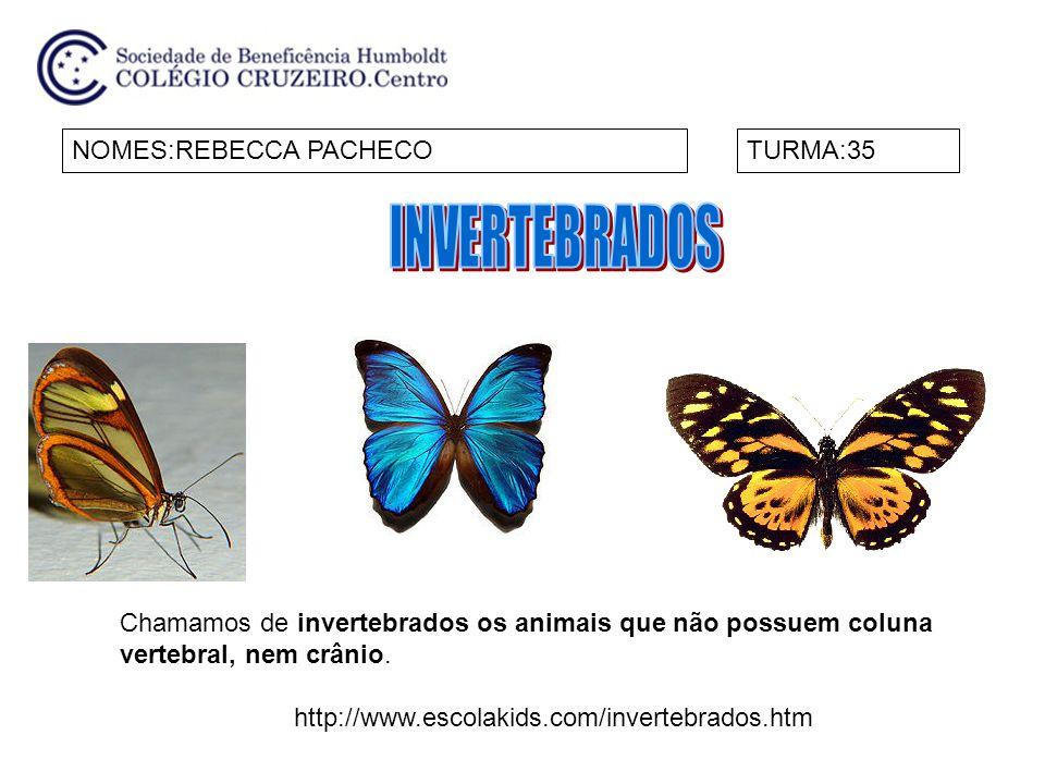 NOMES:REBECCA PACHECOTURMA:35 Chamamos de invertebrados os animais que não possuem coluna vertebral, nem crânio. http://www.escolakids.com/invertebrad