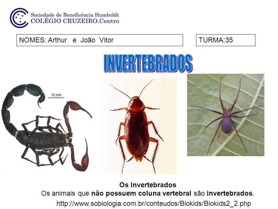 NOMES: Arthur e João VitorTURMA:35 Os Invertebrados Os animais que não possuem coluna vertebral são invertebrados. http://www.sobiologia.com.br/conteu