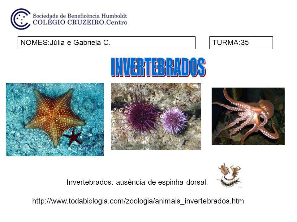 NOMES:Júlia e Gabriela C.TURMA:35 Invertebrados: ausência de espinha dorsal. http://www.todabiologia.com/zoologia/animais_invertebrados.htm