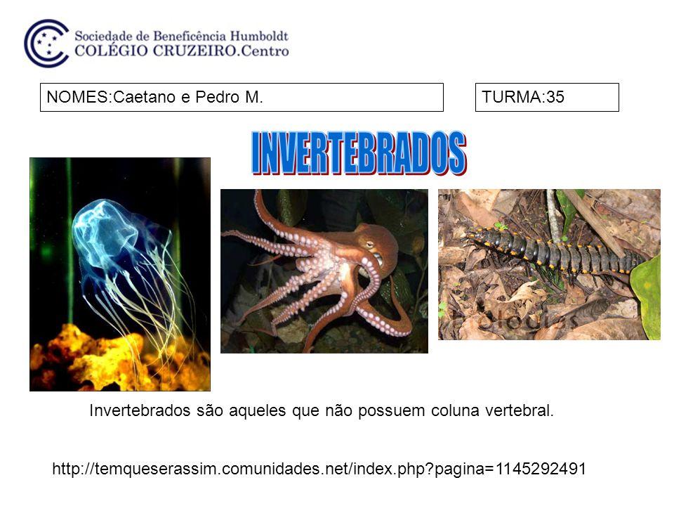 NOMES:Caetano e Pedro M.TURMA:35 Invertebrados são aqueles que não possuem coluna vertebral.