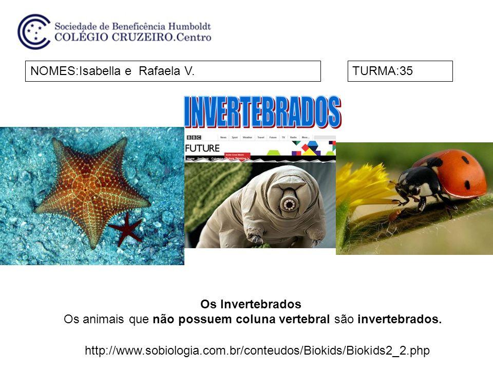 NOMES:Isabella e Rafaela V.TURMA:35 Os Invertebrados Os animais que não possuem coluna vertebral são invertebrados. http://www.sobiologia.com.br/conte