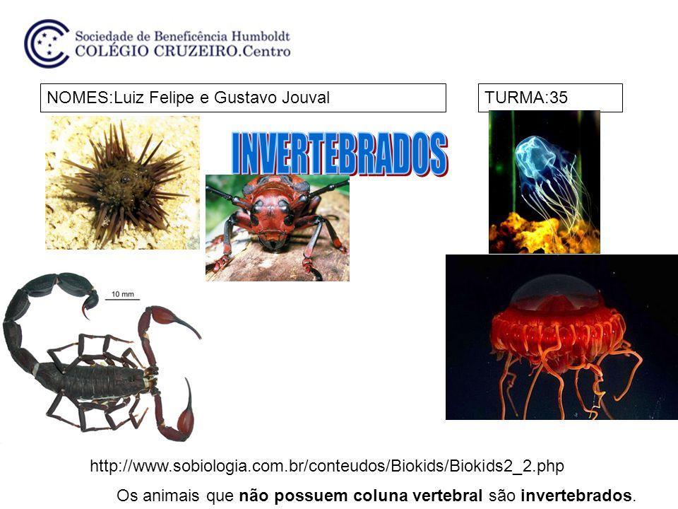 NOMES:Luiz Felipe e Gustavo JouvalTURMA:35 Os animais que não possuem coluna vertebral são invertebrados. http://www.sobiologia.com.br/conteudos/Bioki