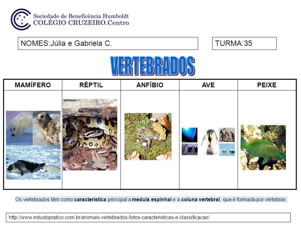 MAMÍFERORÉPTILANFÍBIOAVEPEIXE NOMES:Júlia e Gabriela C.TURMA:35 http://www.estudopratico.com.br/animais-vertebrados-fotos-caracteristicas-e-classificacao/ Os vertebrados têm como característica principal a medula espinhal e a coluna vertebral, que é formada por vértebras.