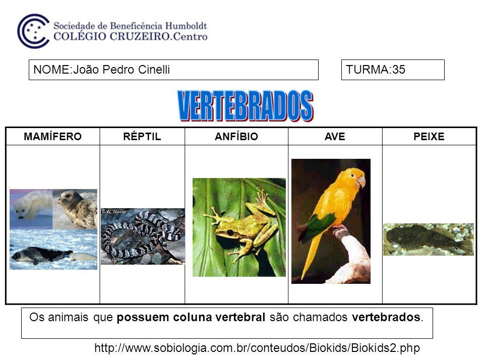 MAMÍFERORÉPTILANFÍBIOAVEPEIXE NOME:João Pedro CinelliTURMA:35 Os animais que possuem coluna vertebral são chamados vertebrados.