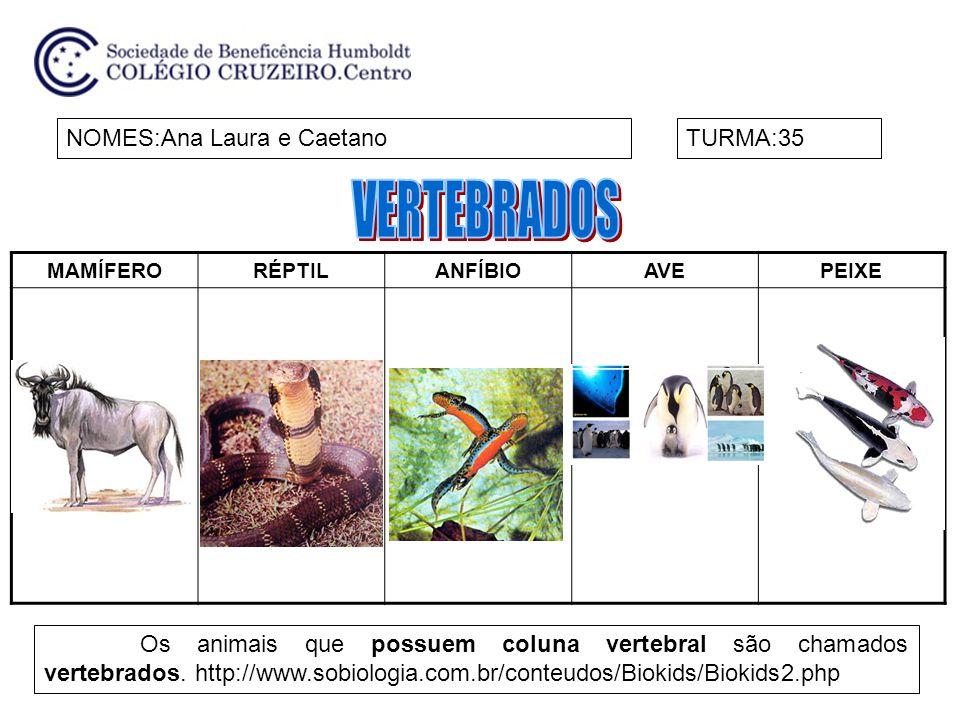 MAMÍFERORÉPTILANFÍBIOAVEPEIXE NOMES:Ana Laura e CaetanoTURMA:35 Os animais que possuem coluna vertebral são chamados vertebrados. http://www.sobiologi