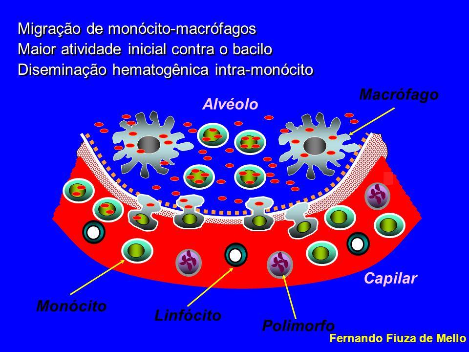 Alvéolo Capilar Macrófago Migração de monócito-macrófagos Maior atividade inicial contra o bacilo Diseminação hematogênica intra-monócito Migração de