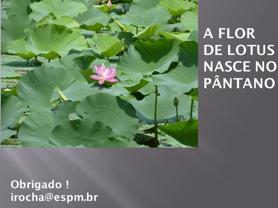 A FLOR DE LOTUS NASCE NO PÂNTANO Obrigado ! irocha@espm.br