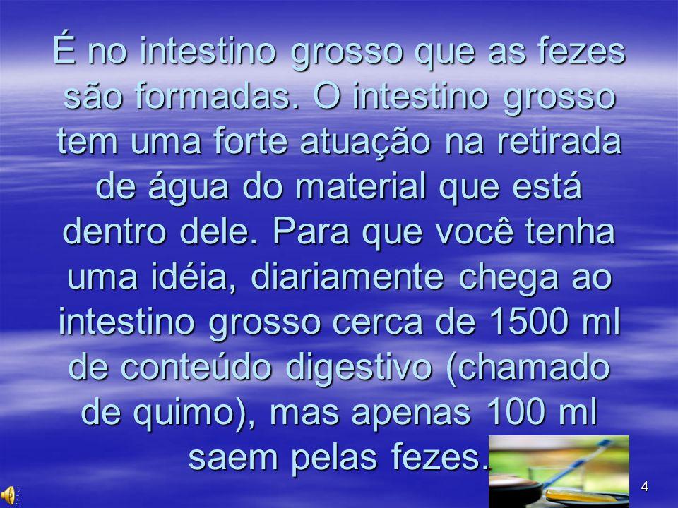 4 É no intestino grosso que as fezes são formadas. O intestino grosso tem uma forte atuação na retirada de água do material que está dentro dele. Para