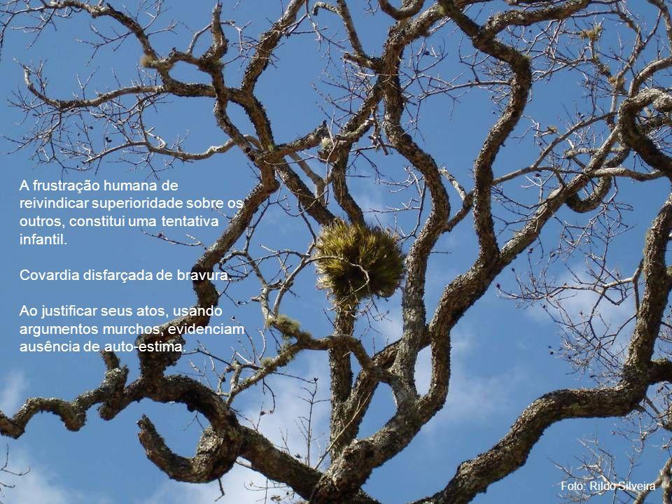 Foto: Rildo Silveira A frustração humana de reivindicar superioridade sobre os outros, constitui uma tentativa infantil.