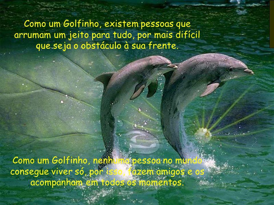 Como um Golfinho, existem pessoas que arrumam um jeito para tudo, por mais difícil que seja o obstáculo à sua frente. Como um Golfinho, nenhuma pessoa
