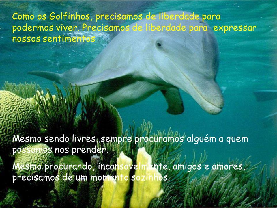Como os Golfinhos, precisamos de liberdade para podermos viver. Precisamos de liberdade para expressar nossos sentimentos Mesmo sendo livres, sempre p