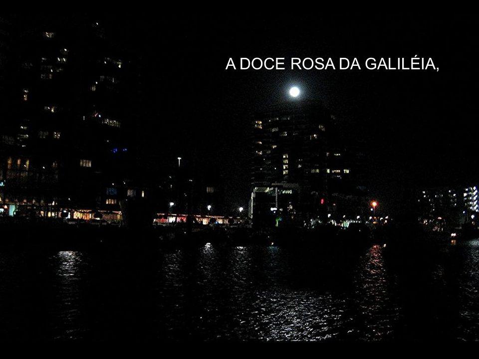 LEMBRAMOS O NOME DA ROSA DE NAZARÉ,