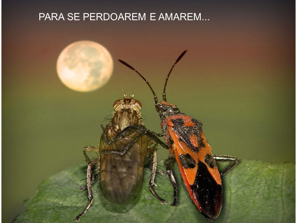 ONDE TODOS SE DARÃO AS MÃOS...
