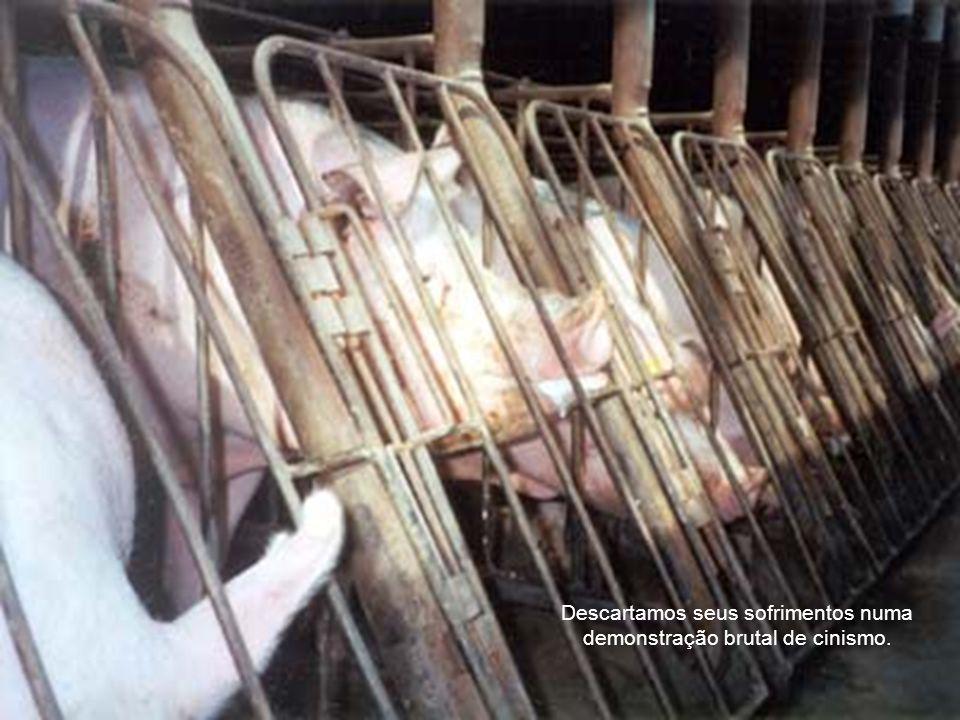 Confinamos, torturamos e matamos os animais para nos alimentar deles.
