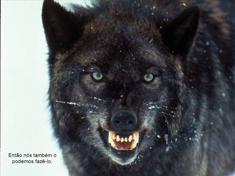 Foto: Rildo Silveira Alegamos que na natureza os animais matam para comer.