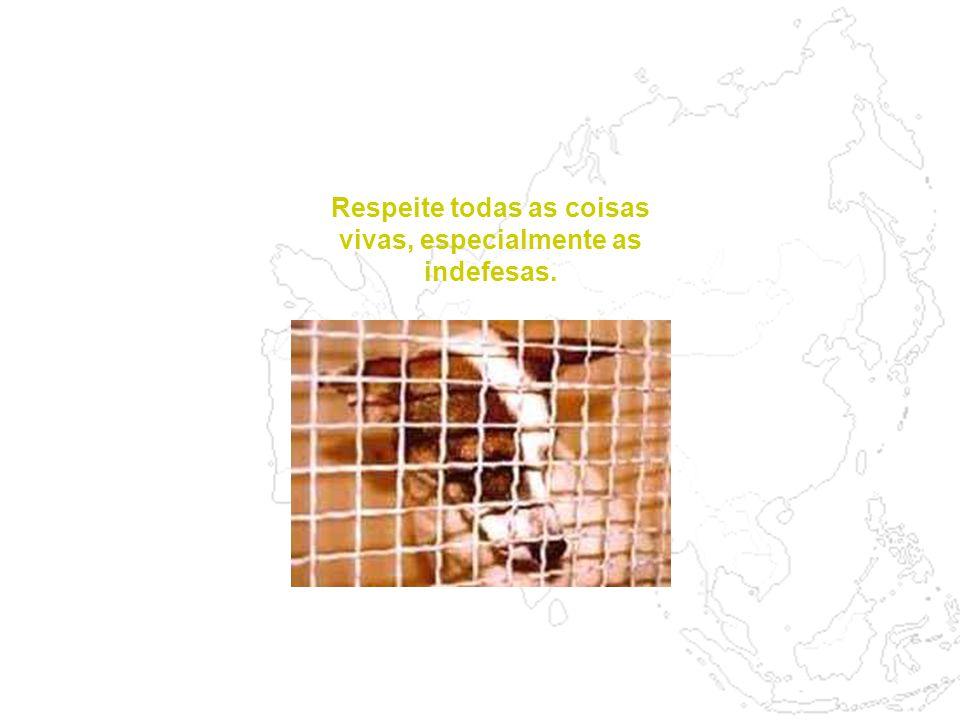 Após a venda os cães, geralmente raças grandes, são levados para matadouros especializados. Aí, os animais são mantidos todos na mesma sala, assistind