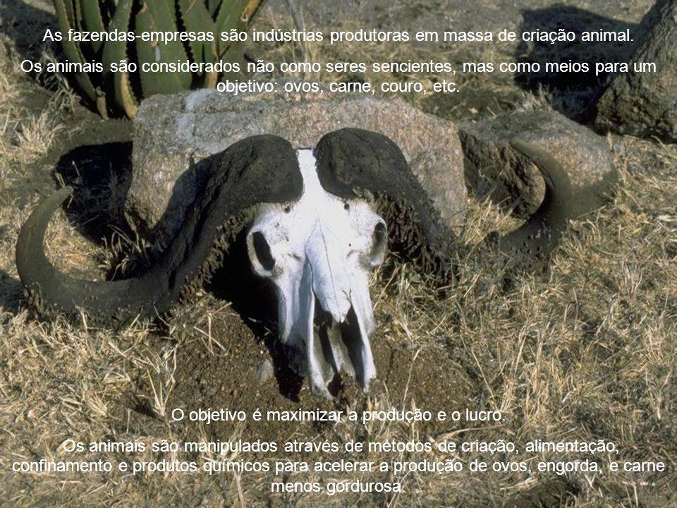 Agro-Business A Indústria da Crueldade A impiedade com que sacrificamos nosso senso de decência para maximizar os lucros na criação de animais define