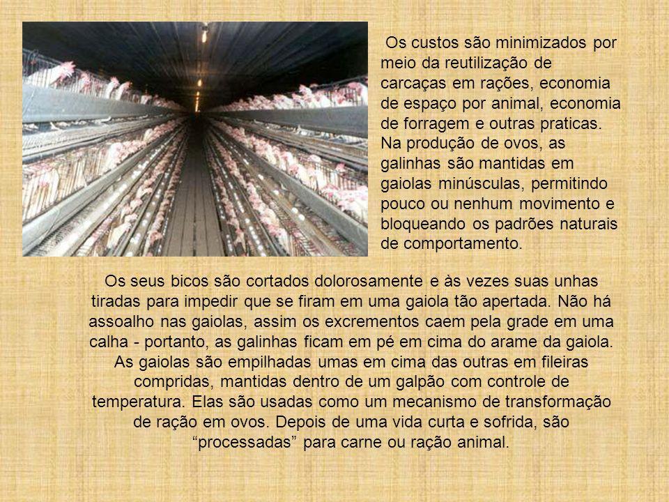 O objetivo é maximizar a produção e o lucro. Os animais são manipulados através de métodos de criação, alimentação, confinamento e produtos químicos p