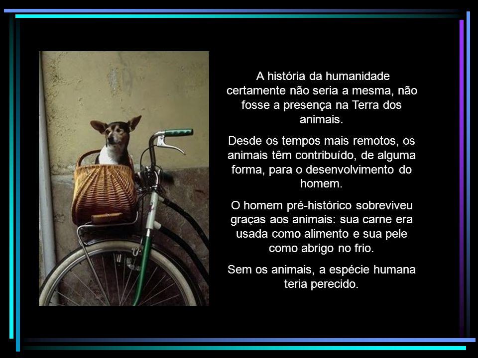 Animais Nossos Colaboradores Rildo Silveira Created by rildosilveira@yahoo.com.br Cruzília – MG – Brasil Paul e Linda McCartney Nós nos sentimos melhores com nós mesmos e melhores com os animais, sabendo que nós não estamos contribuindo para o sofrimento deles.