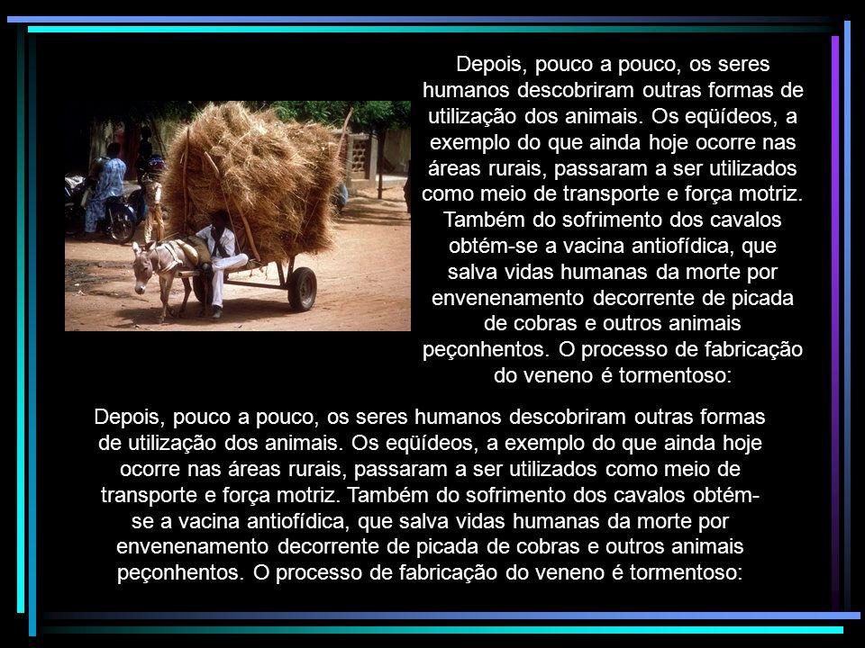 A história da humanidade certamente não seria a mesma, não fosse a presença na Terra dos animais.