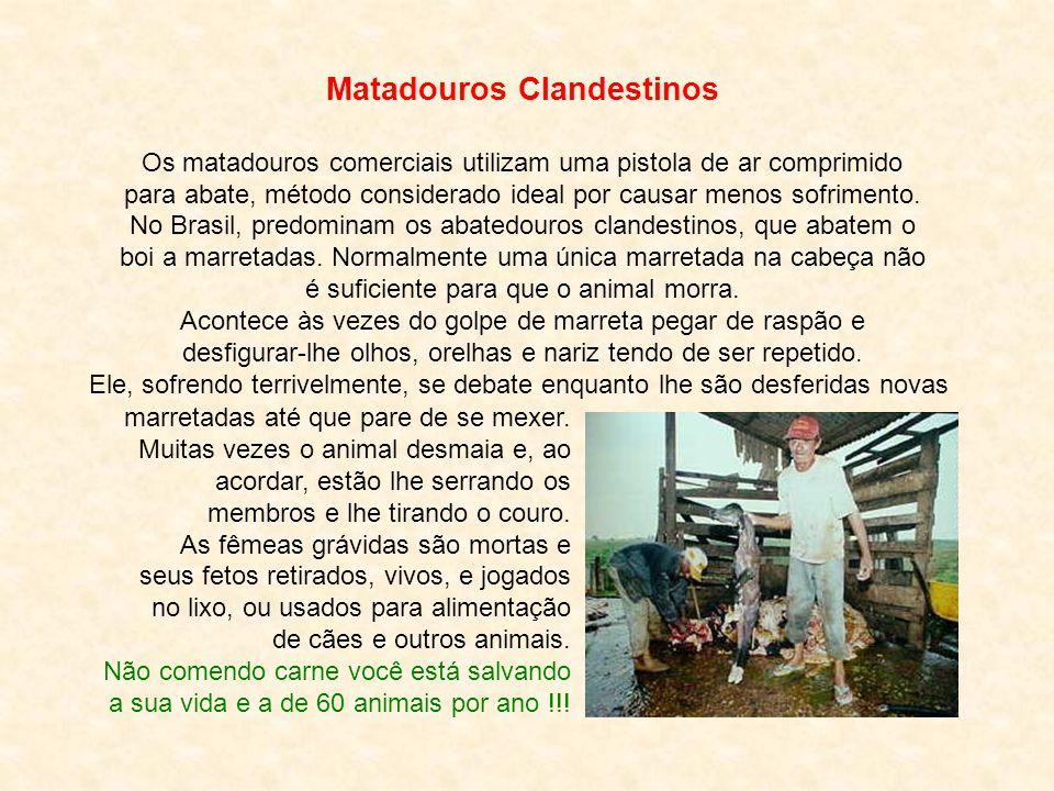 Rildo Silveira Created by rildosilveira@yahoo.com.br Cruzília – MG – Brasil Pitágoras Enquanto o homem continuar a ser destruidor impiedoso dos seres