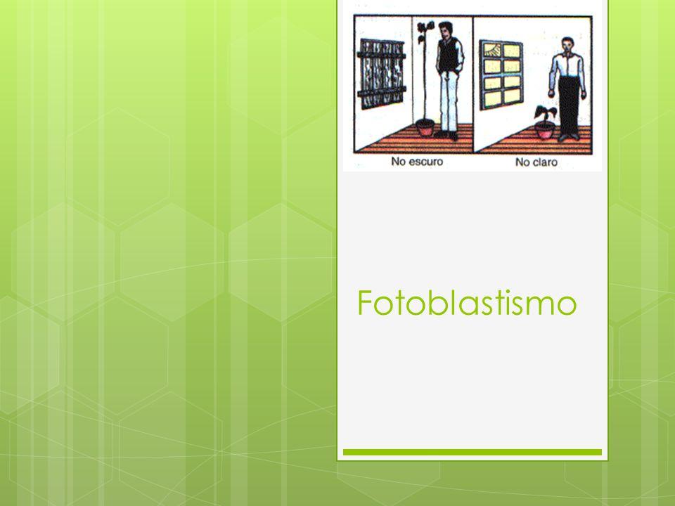 O que é Fotoblastismo.É a influência da luz na germinação das sementes.