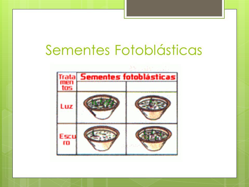 Cucumis anguria Sementes de Cucumis anguria apresentam: Fotoblastismo negativo.