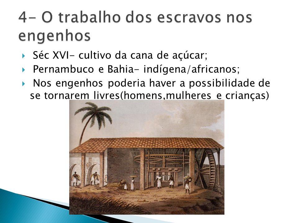 Séc XVI- cultivo da cana de açúcar; Pernambuco e Bahia- indígena/africanos; Nos engenhos poderia haver a possibilidade de se tornarem livres(homens,mu