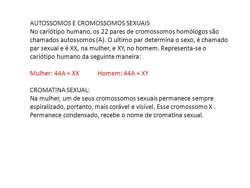 AUTOSSOMOS E CROMOSSOMOS SEXUAIS No cariótipo humano, os 22 pares de cromossomos homólogos são chamados autossomos (A). O ultimo par determina o sexo,