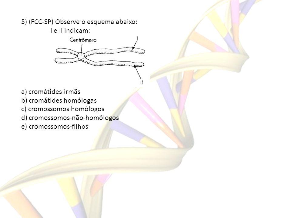 5) (FCC-SP) Observe o esquema abaixo: I e II indicam: a) cromátides-irmãs b) cromátides homólogas c) cromossomos homólogos d) cromossomos-não-homólogo