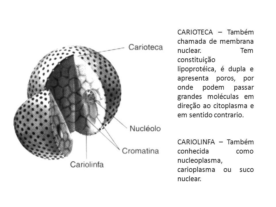 CARIOTECA – Também chamada de membrana nuclear. Tem constituição lipoprotéica, é dupla e apresenta poros, por onde podem passar grandes moléculas em d