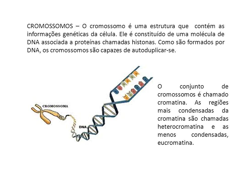 CROMOSSOMOS – O cromossomo é uma estrutura que contém as informações genéticas da célula. Ele é constituído de uma molécula de DNA associada a proteín