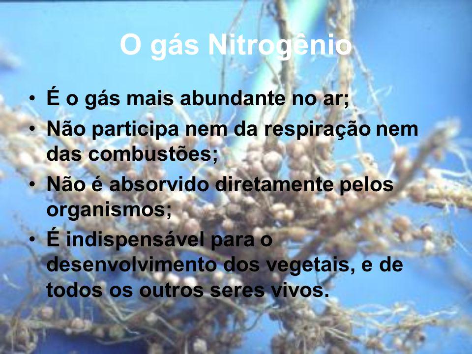 O gás Nitrogênio É o gás mais abundante no ar; Não participa nem da respiração nem das combustões; Não é absorvido diretamente pelos organismos; É indispensável para o desenvolvimento dos vegetais, e de todos os outros seres vivos.
