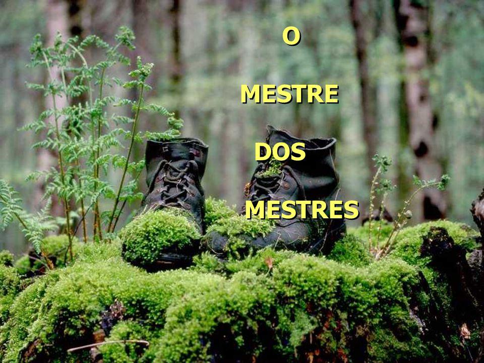 O MESTRE DOS MESTRES O MESTRE DOS MESTRES
