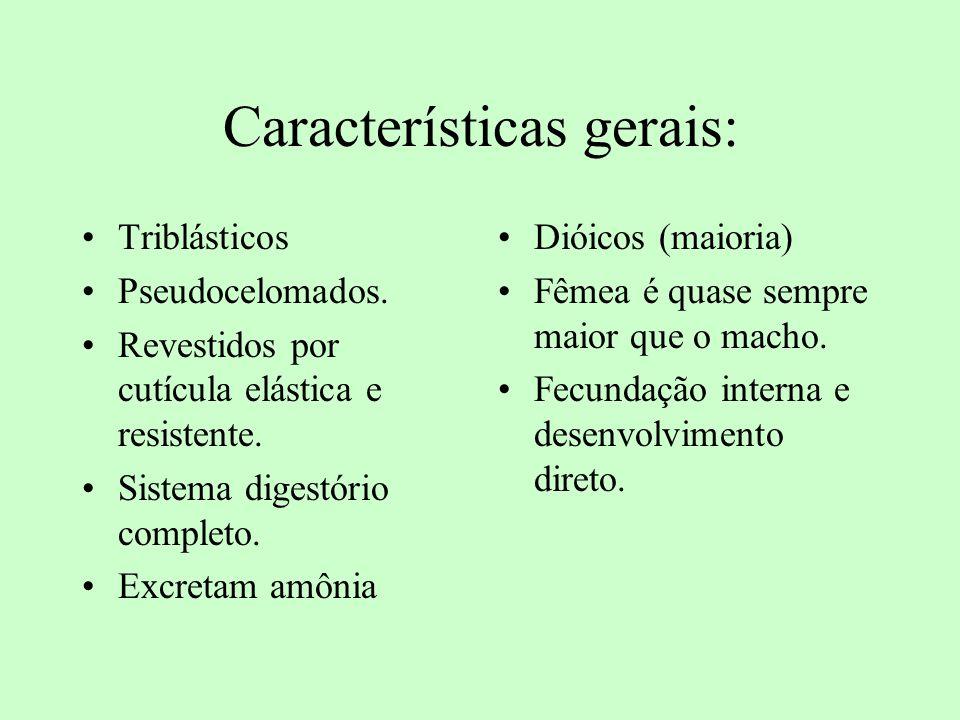 Características gerais: Triblásticos Pseudocelomados. Revestidos por cutícula elástica e resistente. Sistema digestório completo. Excretam amônia Diói