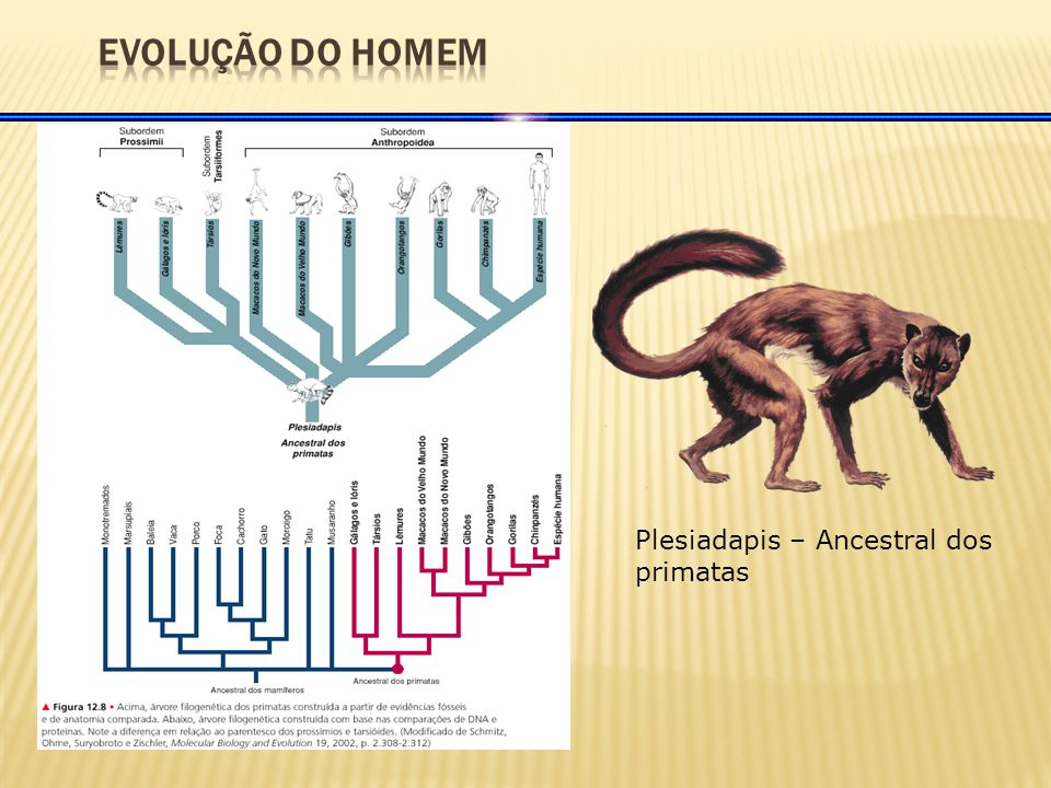 Plesiadapis – Ancestral dos primatas