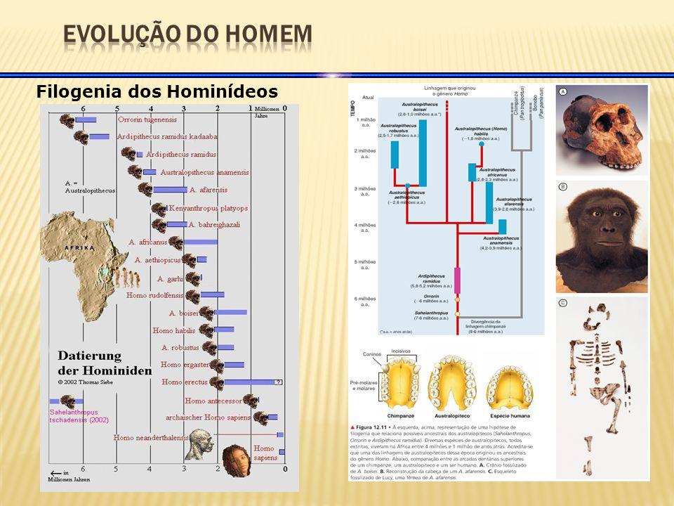 Filogenia dos Hominídeos