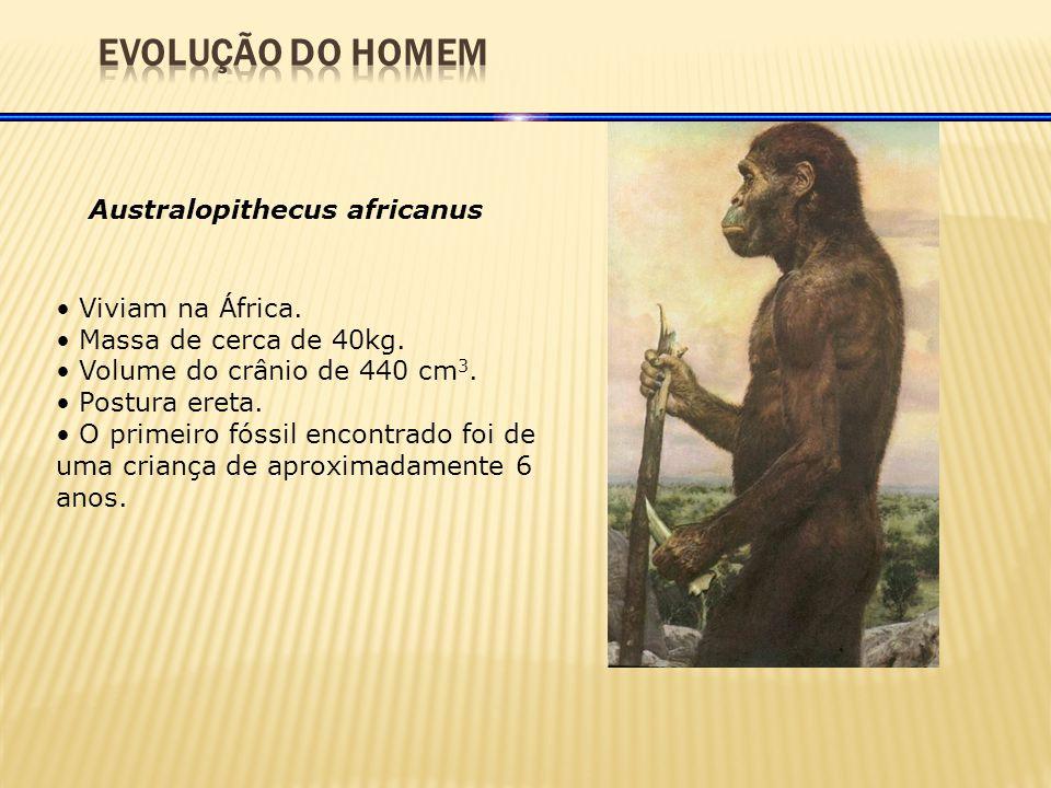 Australopithecus africanus Viviam na África.Massa de cerca de 40kg.