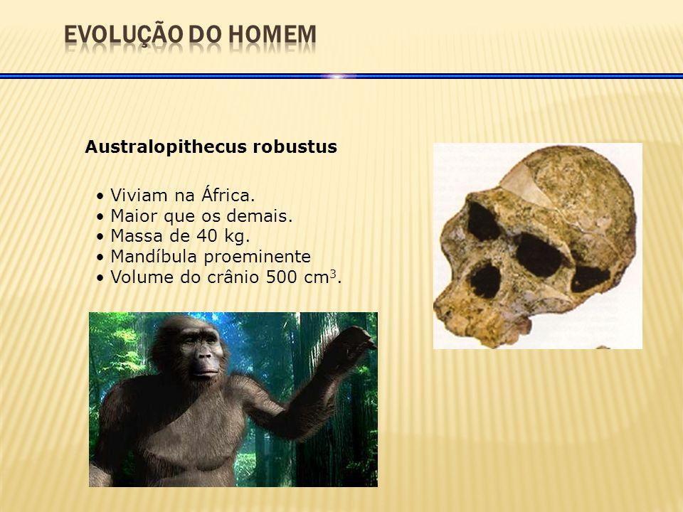 Australopithecus robustus Viviam na África.Maior que os demais.