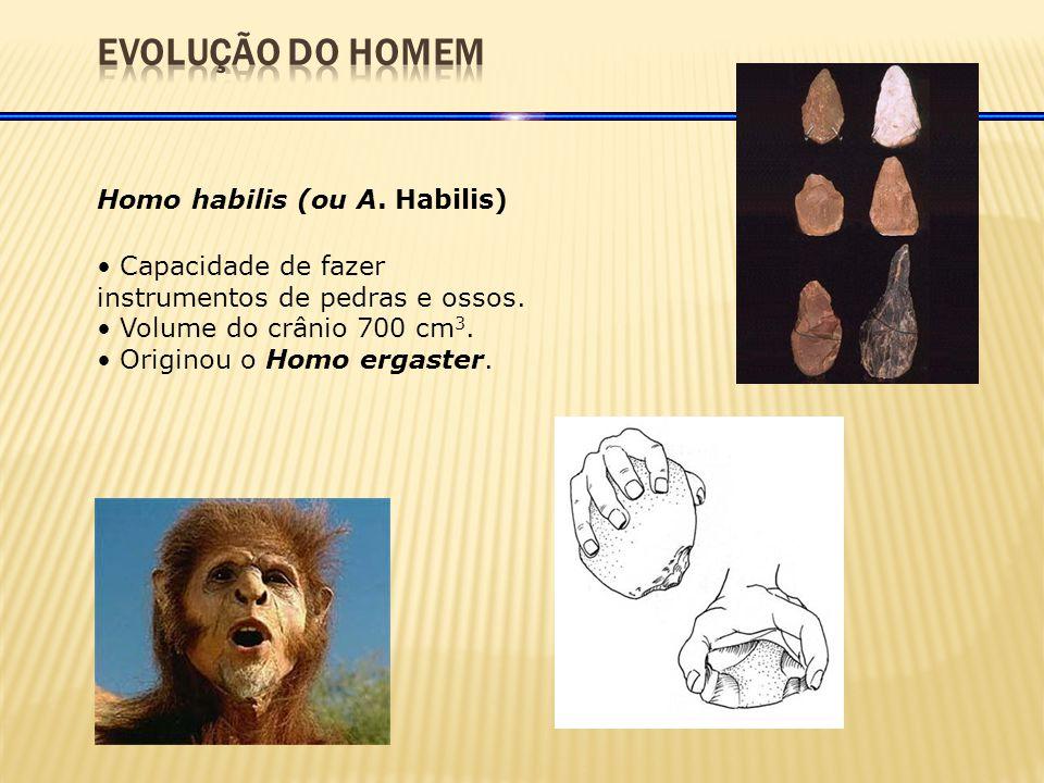Homo habilis (ou A.Habilis) Capacidade de fazer instrumentos de pedras e ossos.