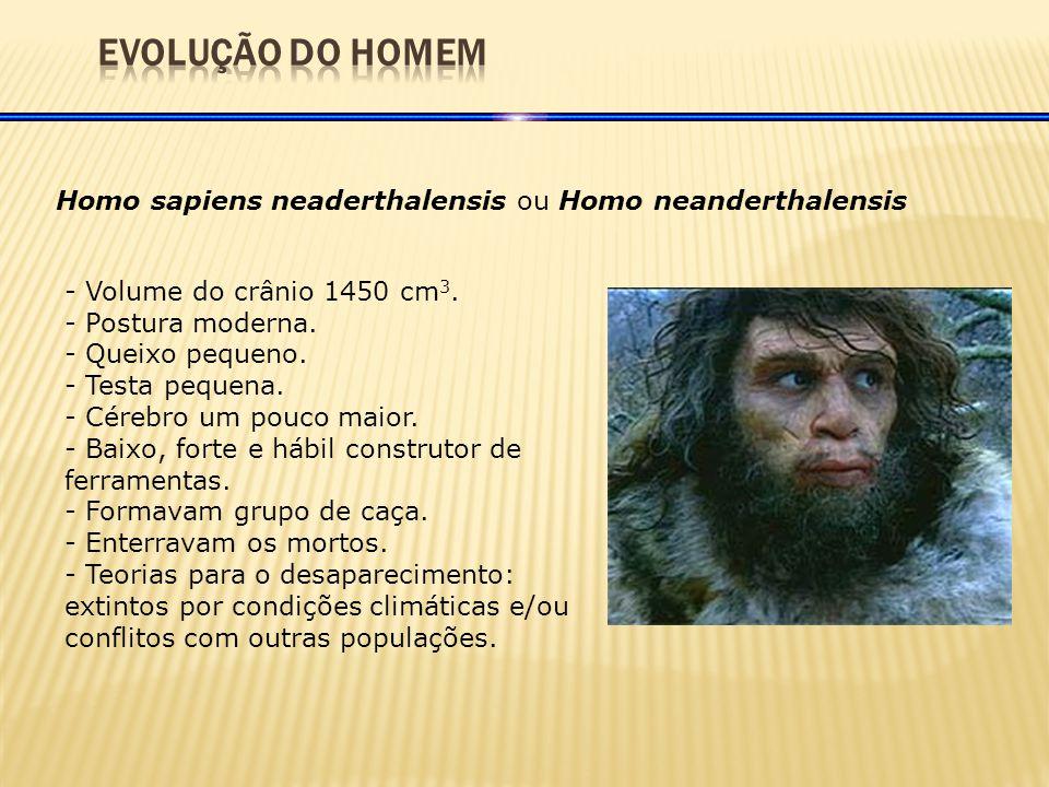 Homo sapiens neaderthalensis ou Homo neanderthalensis - Volume do crânio 1450 cm 3.