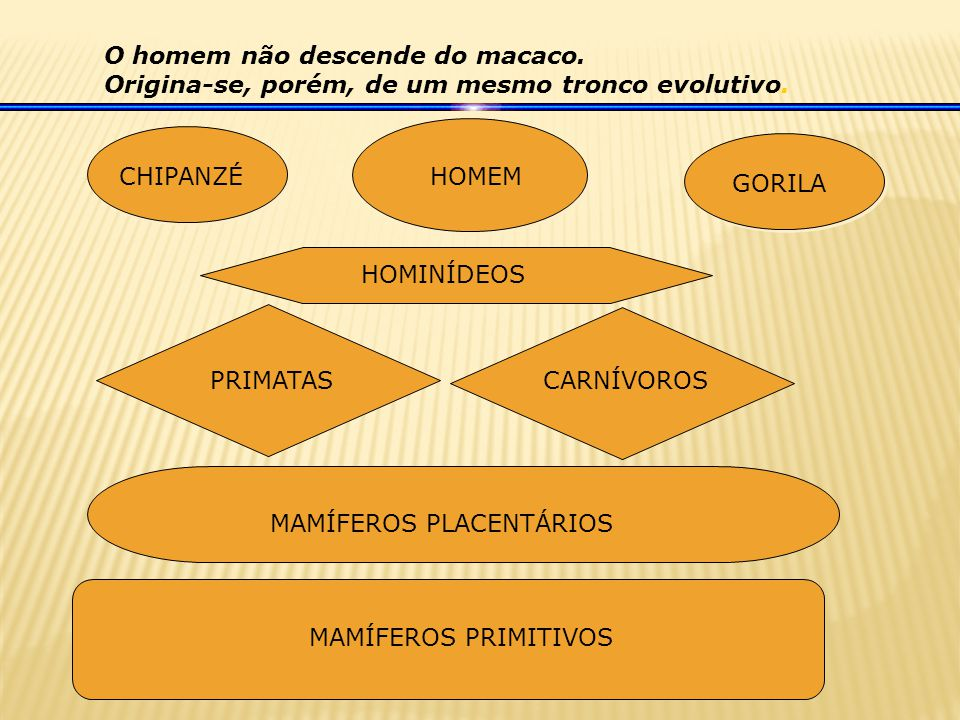 O homem não descende do macaco.Origina-se, porém, de um mesmo tronco evolutivo.
