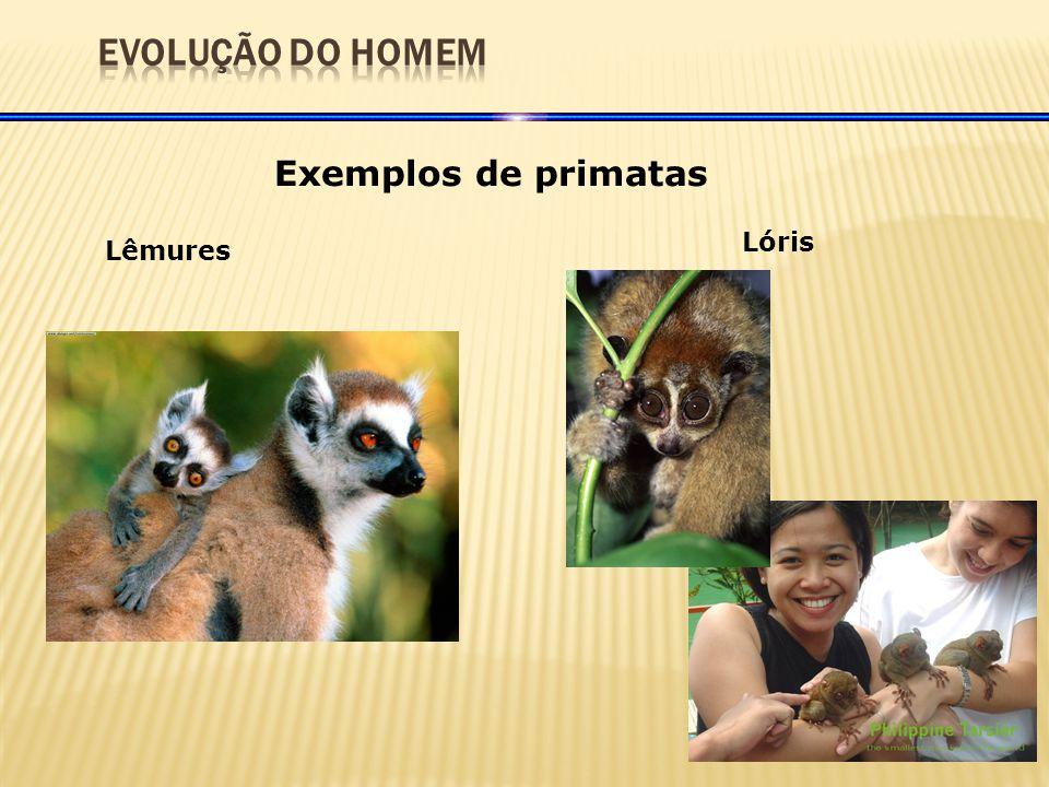 Exemplos de primatas TársiosGibãoOrangotango