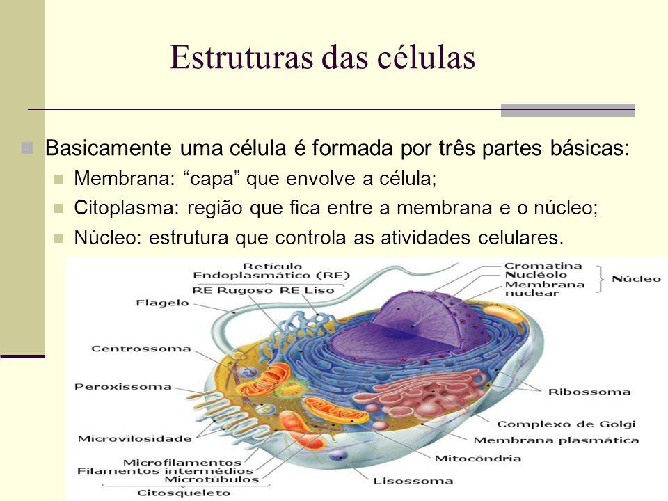 Estruturas das células Basicamente uma célula é formada por três partes básicas: Membrana: capa que envolve a célula; Citoplasma: região que fica entre a membrana e o núcleo; Núcleo: estrutura que controla as atividades celulares.